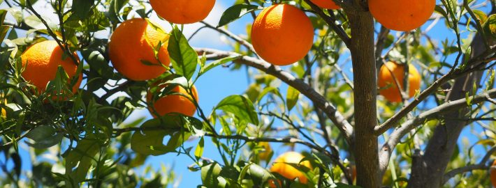 clementinas en España